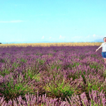 France - Among the Lavender