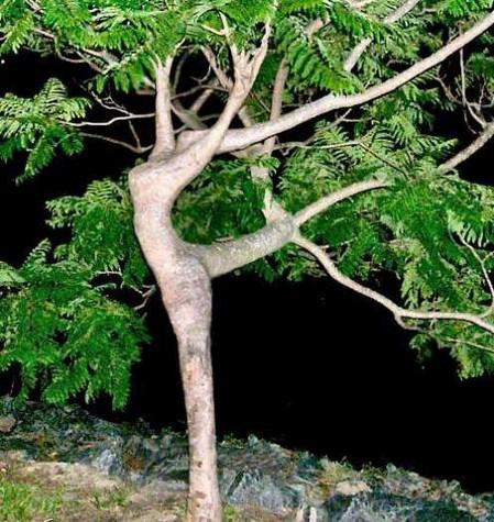 Girl Tree The Feminist Wire