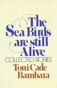 seabirds 1