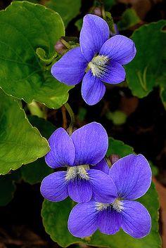 Flowers-Morris